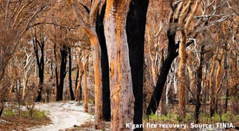 Wildlife Australia - Kgari Fraser Island Bushfire Recovery